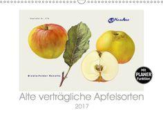 Alte verträgliche Apfelsorten - CALVENDO