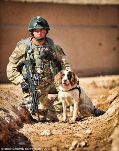 Jack, hero dog with the British army in Afghanistan