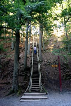 My favorite place! Pic is jacobs ladder. Truro's Victoria Park is one of Nova Scotia's most beautiful walking parks. Jacob's Ladder, seen here, is 197 steps straight to the top of the mountain, taking you through the lush forest. East Coast Canada, Nova Scotia Travel, Acadie, Ottawa, East Coast Road Trip, Atlantic Canada, Canada Travel, Canada Trip, Newfoundland And Labrador