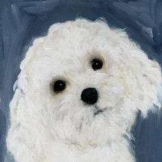 Great painting of a Bichon!