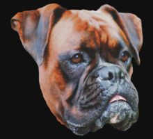 Germany boxer dog  by Rostislav Bouda