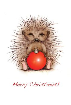 All cards are left blank inside for your own message, come complete with an envelope and are packaged in a cellophane wallet. Available individually or in packs of 5 or Feel free to contact me for multi-pack order prices. Christmas Jokes, Christmas Pictures, Christmas Art, All Things Christmas, Hedgehog Craft, Hedgehog Pet, Cute Hedgehog, Hedgehog Illustration, Cute Illustration