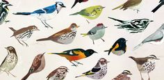 Ease into your morning with a new birdsong alarm clock, created by the Carnegie Museum of Natural History.