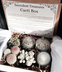 Succulent Treasures Cacti Box. The perfect unique living gift! Our boxes are made up of a half dozen cactus. Assortments are of 2.5 rooted