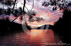 An classic colorful sunset image reflecting a golden pink and purple covering the entire surface of Eagle Lake in upper state New York with glowing clouds and the silhouette of a pine branch in the foreground. Eagle Lake, Glow Cloud, Pink Lake, Sunset Images, Pine Branch, Sunrises, Around The Worlds, Surface, Clouds