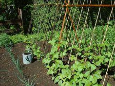 En été, pas de congé pour le jardinier ! En effet, durant la période estivale, le potager réclame toute votre attention. En plus des nombreuses récoltes à assurer, il convient également d'anticiper les récoltes d'automne avec les semis d'été ! Que semer au potager durant les mois d'été ? Fin Juin, début Juillet : C'est …