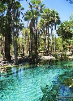 australia mataranka hot springs, northern territory