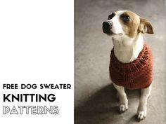 Free dog sweater knitting patterns