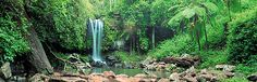 Relaxing walk in the rainforest, then kick back in your cosy cottage on Tamborine Mountain..http://www.lissongrove.com.au