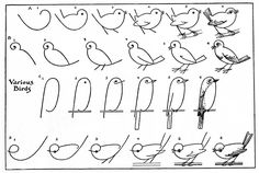 "Audubon California on Twitter: ""Now you know how to draw a bird. #NationalBirdDay https://t.co/MvhwlK8W9O"""