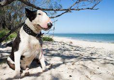 Bullie sit on an exotic beach.
