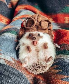 I heard the you might had a bad day so heres a cute hedgehog Baby Animals Super Cute, Cute Baby Dogs, Cute Dogs And Puppies, Cute Little Animals, Cute Funny Animals, Cutest Animals, Cutest Pets, Hedgehog Pet, Cute Hedgehog