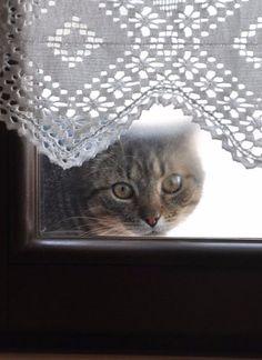 cat ♥