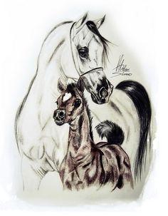 foals arabian
