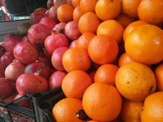 Oranges and grapefruits for fresh juice