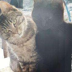 Cats Of Instagram, Animals, Animaux, Animal, Animales, Animais