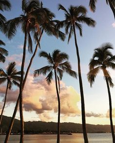 It is still summer. Get outside. 🌴🌴🌴 #sunsetdreams . . . #coconuts #squad #palmtrees #sunset #endlesssummer #hawaii #sunsetlove #golden #sunsetlovers #sky #skyzone #skyline #skyscape #sky_perfection #tropical #paradise #pacificisland #islandlife #islandliving #beautfiul #horizon #visit  #relaxingmode #reflection #summernights #happymoments #talalifestyle #talahonolulu #grateful