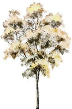 Silueta árbol 5