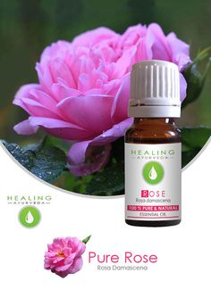 Pure Rose oil Undiluted Rose Otto Aromatherapy Rose by FairOrganic