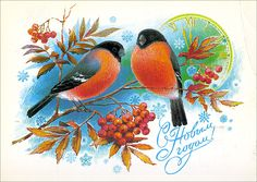 Bullfinch – Birds – Vintage Russian Postcard -Happy New Year - Kostüm Ideen Photo Postcards, Vintage Postcards, Vintage Happy New Year, Vintage Year, New Year Postcard, Bullfinch, Soviet Art, Feather Art, Russian Art