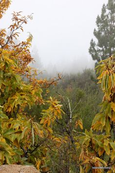 First Signs of Autumn by islandmommacanarias, via Flickr