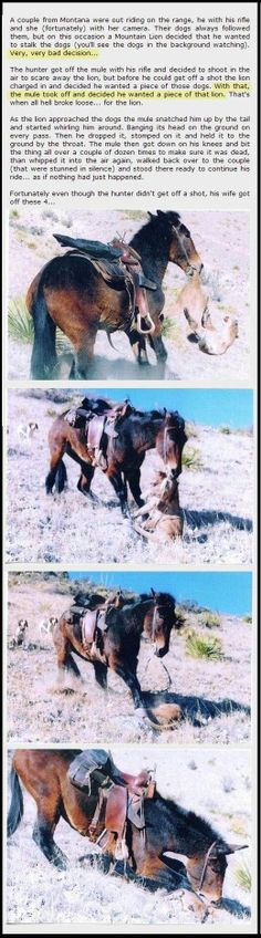 I had no idea,mules were so bad ass!!