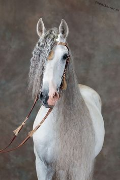 OMG I can not get over how much I love this horses hair. It looks like its crimped