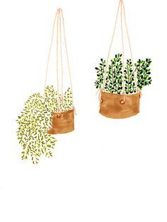 INDOOR PLANTS LUCY AUGE