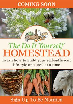 The Do It Yourself Homestead l Worried you're not self-sufficient  Want to Make Your Own, Do It Yourself, Live Sustainably l We have a book for that l Homestead Lady (.com)