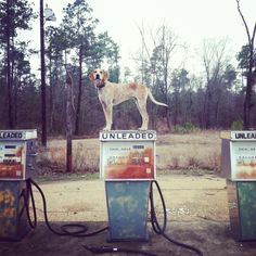 Maddie on things. A guys photo blog about his Coonhound standing ontop of things in different cities.