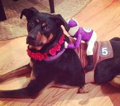 A friend of PAWS Chicago ready for trick or treaters!