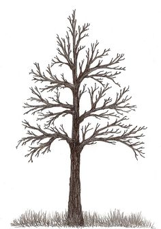 here are tree sketches