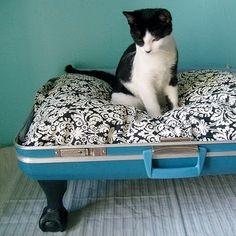Edgar is a fancy cat. He deserves a fancy bed.