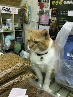 Friends, Cats, Animals, Amigos, Gatos, Animales, Animaux, Animal, Cat