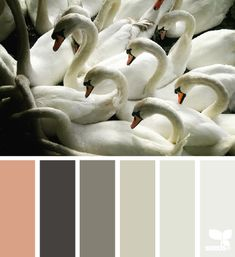color flock