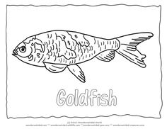 Goldfish Coloring Pic 4 Goldfish Picture to Color for our Fish Coloring Pages Collection, Black and White Outline of printable fish picture