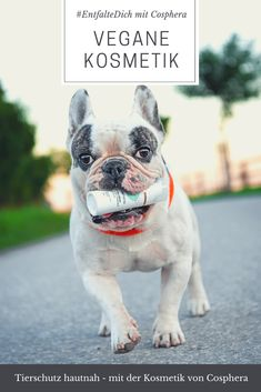 Mit dem Kauf von veganen Nahrungsergänzungsmitteln und Kosmetikprodukten Tiere schützen!   Cosphera French Bulldog, Highlights, Dogs, Animals, Structure Of Cell, Red Blood Cells, Human Body, Collagen, Organic Beauty
