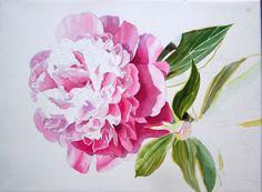 Pink Peony in watercolor - work in progress by Doris Joa