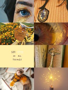 Harry Potter Houses, Harry Potter Books, Hogwarts Houses, Harry Potter Fandom, Harry Potter World, Famous Hufflepuffs, Hufflepuff Wallpaper, Slytherin And Hufflepuff, Harry Potter Aesthetic