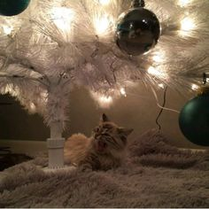 """#christmas #christmastree #cat #kitten #cute #decorations #baubles #winter #xmas #festive"" Photo taken by @christmas.addict.2015 on Instagram, pinned via the InstaPin iOS App! http://www.instapinapp.com (11/09/2015)"