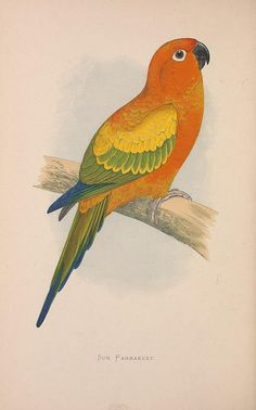 n113_w1150 by BioDivLibrary, via Flickr