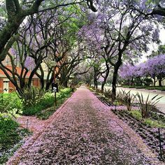 University of Pretoria in IPitoli, IGauteng Pretoria, True North, Crazy Life, South Africa, Beautiful Places, February, Landscapes, University, Country Roads