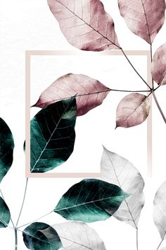design wallpaper Pink and green leaves with pink square frame, iphone and mobile phone wallpaper Pink And Green Wallpaper, Rose Gold Wallpaper, Iphone Wallpaper Green, Leaves Wallpaper, Flower Backgrounds, Wallpaper Backgrounds, Wallpaper Patterns, Wallpaper Quotes, Iphone Wallpapers