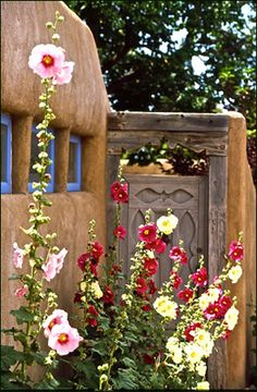 Hollyhocks in Santa Fe, New Mexico Mexican Desert, New Mexican, Mexican Tiles, New Mexico Style, New Mexico Homes, New Mexico Santa Fe, Santa Fe Nm, Southwest Art, Southwest Style