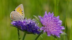 Schmetterlings-Kalender 2015 zum downloaden Insects, Butterfly, 2015 Calendar, Butterflies