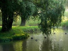 Ducks in the pond | Flickr - Photo Sharing!