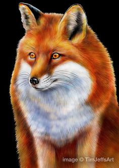 Red Fox 2 Colored Pencil Drawing