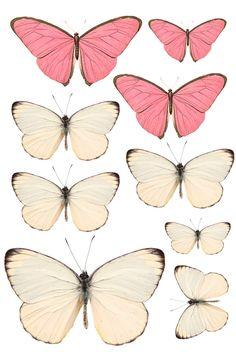 Swirlydoos: Forums / Images & Graphics / Butterflies
