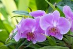 Как организовать уход за орхидеями: 5 толковых советов. Обсуждение на LiveInternet - Российский Сервис Онлайн-Дневников