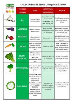 Calendrier des semis: 30 légumes à semer | Jardipartage